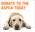 Donate to the ASPCA today