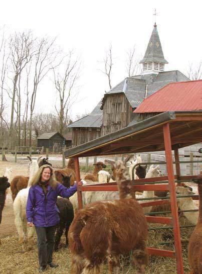 alpacas-offer-way-to-keep-family-farm