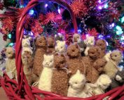 Holiday Christmas Alpaca Shopping